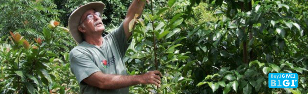 Save Rainforest in Daintree